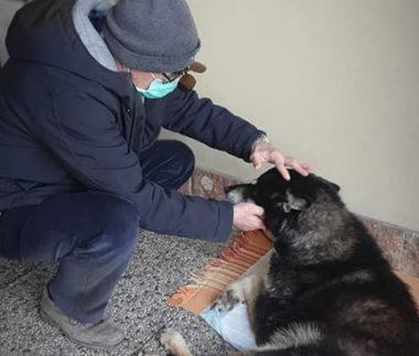 coronavirus e animali da affezione