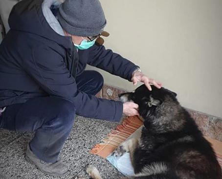 Emergenza Coronavirus e animali da affezione: i veterinari in protezione civile forniscono il loro supporto